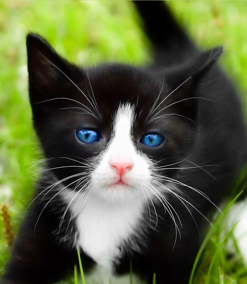 kitten-backgrounds-black-and-white